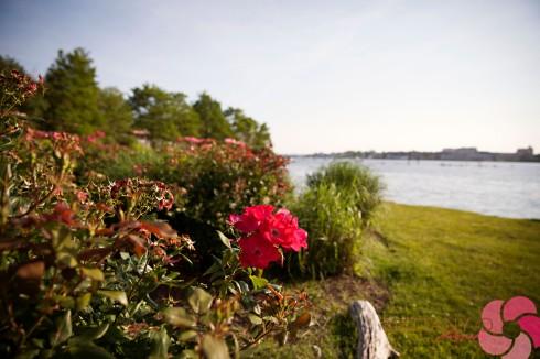 Staten Island Wedding_ (29 of 41)